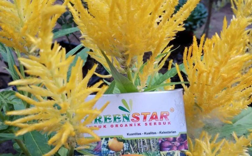 ต้องการปุ๋ยสำหรับผักดอกไม้และไม้ประดับหรือไม่? ใช้ Green Star Nasa เพื่อทำ …